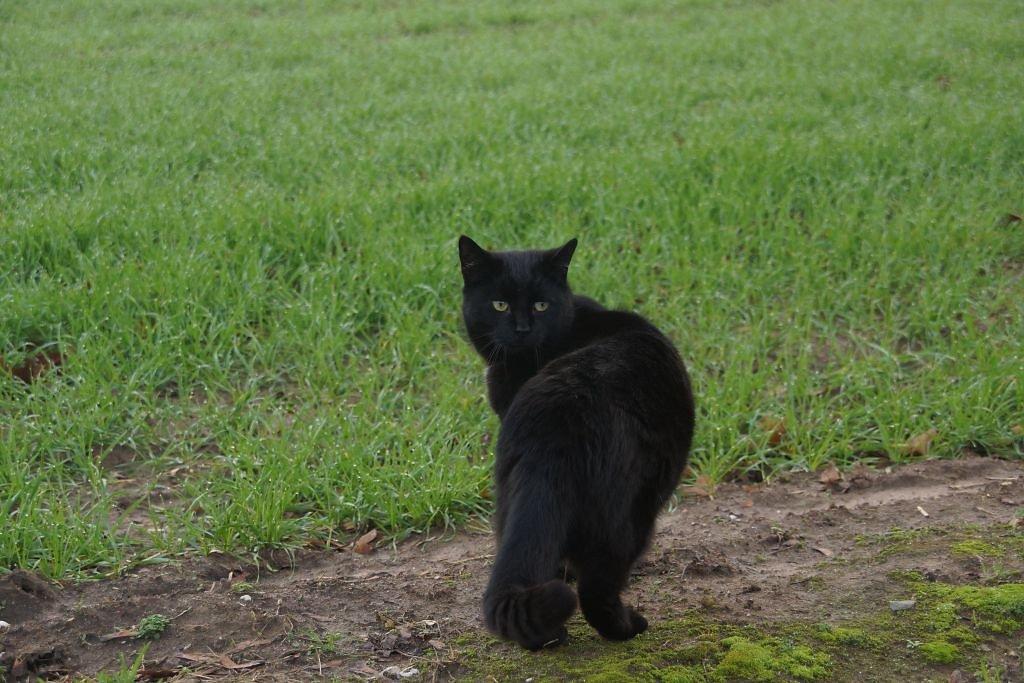 cats-01.jpg