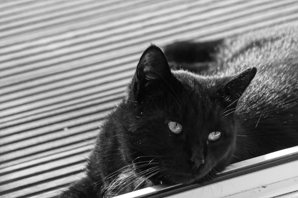 cats-04.jpg
