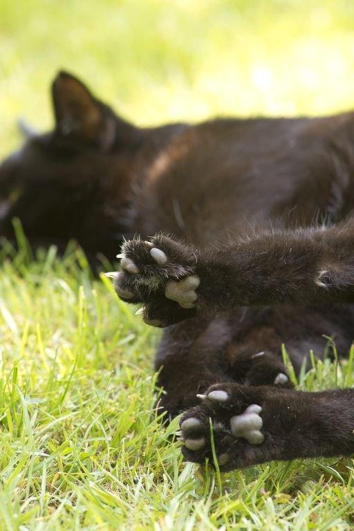 cats-23.jpg