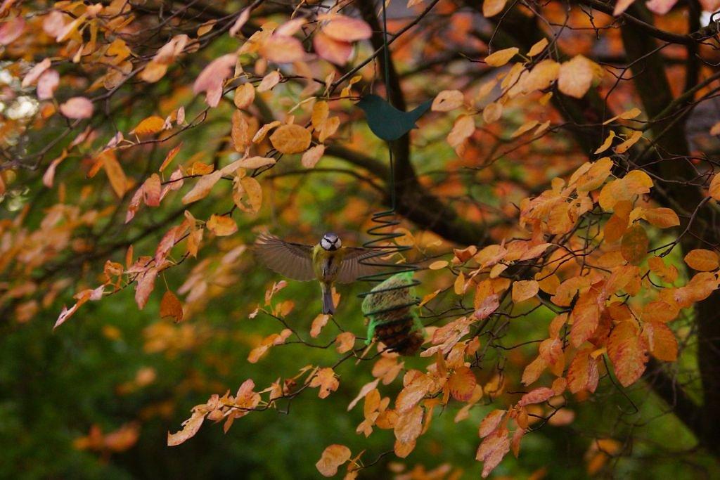 birds-20.jpg